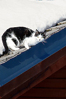 A black and white cat lies in the sun on the snow-covered roof