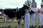 4H teen agers with calves