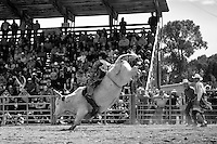 A bull rider looks to score points as a judge and the crowd watch closely.<br />