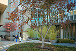 Maple trees and bamboo add to the serenity of the courtyard outside the Duke Medicine Pavilion during an early Fall morning.