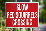 """Slow red squirrels crossing"" road sign in the countryside."