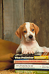 POINTER PUPPY<br /> <br /> Shopping cart has 3 Tabs:<br /> <br /> 1) Rights-Managed downloads for Commercial Use<br /> <br /> 2) Print sizes from wallet to 20x30<br /> <br /> 3) Merchandise items like T-shirts and refrigerator magnets