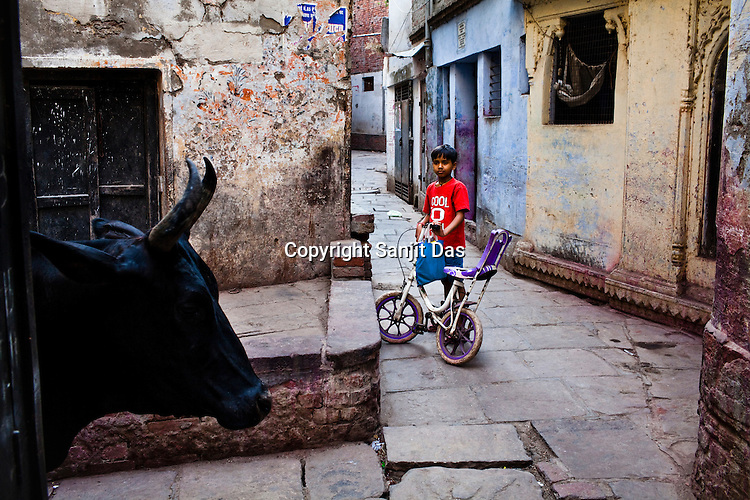 A young boy waits for the bull to pass in the ancient city of Varanasi in Uttar Pradesh, India. Photograph: Sanjit Das/Panos
