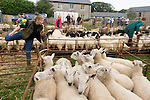 Priddy Sheep and Horse Fair