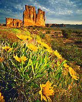 Spring Mule Ear Flowers & Courthouse Towers, Arches National Park, near Moab, Utah