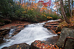 Autumn color along Looking Glass Creek, Pisgah National Forest