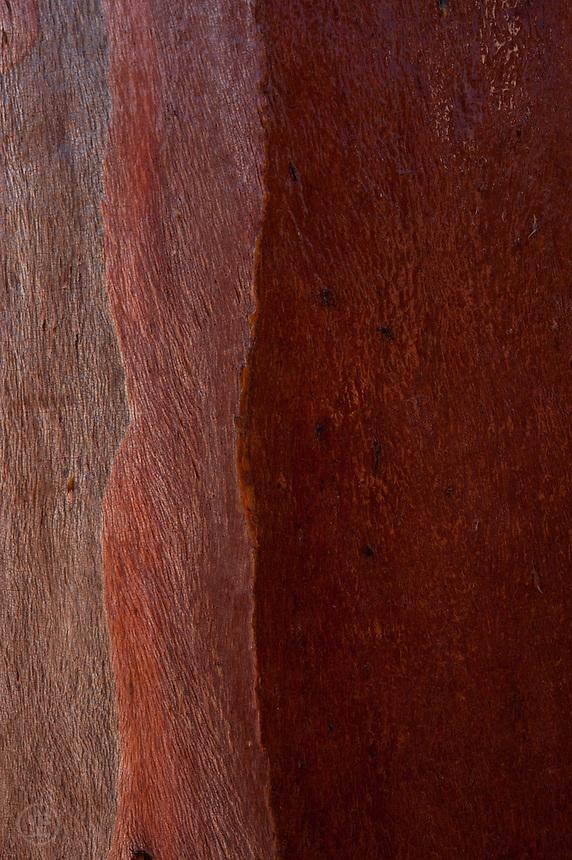 Mallee Bark: Reds
