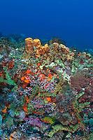 Coral and sponge scenic<br /> Turtle Back Drive<br /> Grenadines