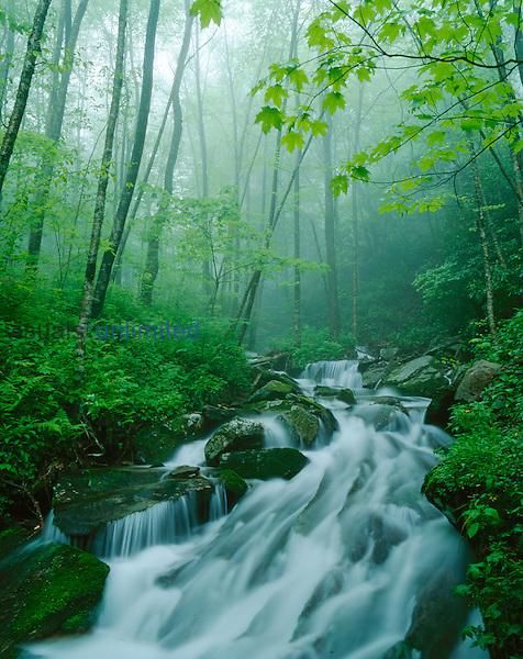 Linn Cove Creek cascading through a foggy Eastern deciduous forest, Blue Ridge Parkway, North Carolina, USA.