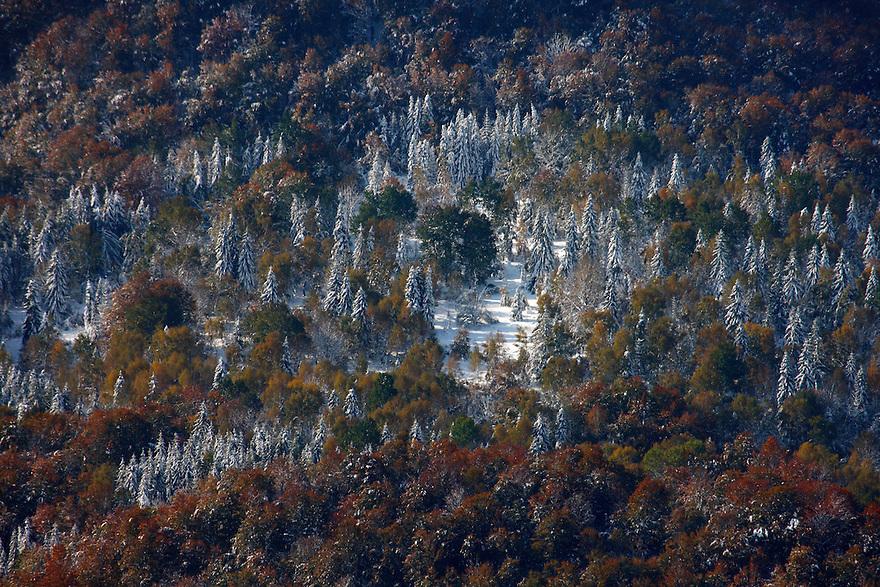 Carpathian forest, view from Polonina Wetlinska, Bieszczady National Park, Poland