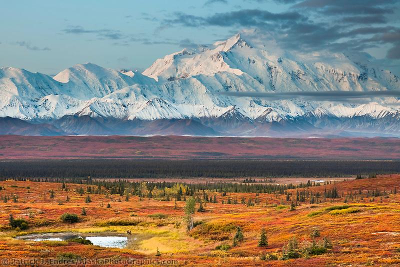 Tundra pond and moose, Mt. Denali of the Alaska range mountains, Denali National Park, interior, Alaska.