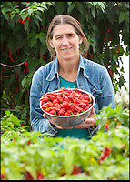 BNPS.co.uk (01202 558833)<br /> LauraJones/BNPS<br /> <br /> Red hot record...<br /> <br /> Tree of fire turns into pot of gold - Dorset Chilli farmer Joy Michaud is hoping she has set a new world record after collecting an astonshing 2407 chilli's from one bush at the weekend.<br /> <br /> Joy Michaud with a bowl of Dorset Naga chilli's.<br /> <br /> Its been a bumper year for chilli's and farmer Joy Michaud has grown a 'tree of fire' with over two thousand of the worlds hottest on it.<br /> <br /> The average chilli 's heat is measured at 30,000 scovell's but the legendary Dorset Naga has been measured at 1.2 million scovel's.<br /> <br /> With that in mind great care has to be taken when handling the explosive crop.<br /> <br /> Joy said 'growing conditions have been perfect this year and  I have never seen a chilli tree this big before, its astonishing.'