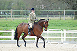 03/04/3016 - Classes 13 to 14 - Affiliated Spring Showing - Brook Farm Training Centre