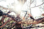 Woman playing yoga on an old tree.<br />