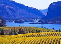"Vineyards at ""Vaseux Lake"", South Okanagan Valley, BC, British Columbia, Canada - Vaseux Lake Migratory Bird Sanctuary"