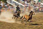 Big Loop roping of the wild horses, Jordan Valley Big Loop Rodeo, ..
