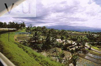 View from a train window passing rice paddies. Indonesia, Java