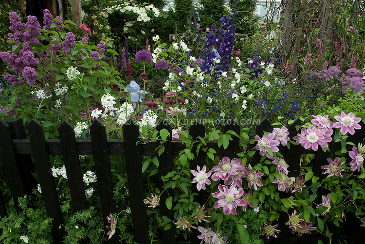 Perennial Flower Garden with Picket Fence