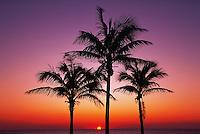 Palm beach, Florida Keys