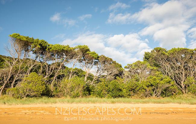 Coastal native bush in Totaranui  on Abel Tasman Coast Track, Abel Tasman National Park, Nelson Region, South Island, New Zealand