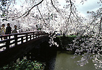 Visitors cross a foot bridge at the Cherry Blossom Festival held in Oyo Park near Hirosaki Castle in Aomori Prefecture in Northern Honshu, Japan. Over 1500 cherry trees come into bloom from late April to Early May. (Jim Bryant Photo).......