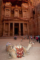 Camels rest in front of the temple or treasury in Petra, Jordan.