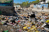 Goats search for food in the rotten garbage left after a street market in Port-au-Prince, Haiti, 10 July 2008.