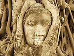 Stone Buddha being strangled by tree roots, Ayattahya, Thailand