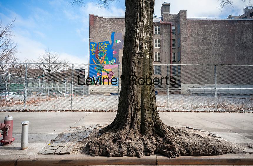 A street tree in the Hudson Square neighborhood of New York on Saturday, February 25, 2017. (© Richard B. Levine)