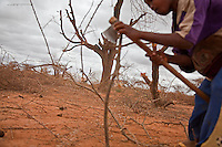 A Somali refugee boy cutting tree branches to be used in perimeter fencing around  his families makeshift camp in the desert outside Dagahaley refugee camp near Dadaab, Kenya.