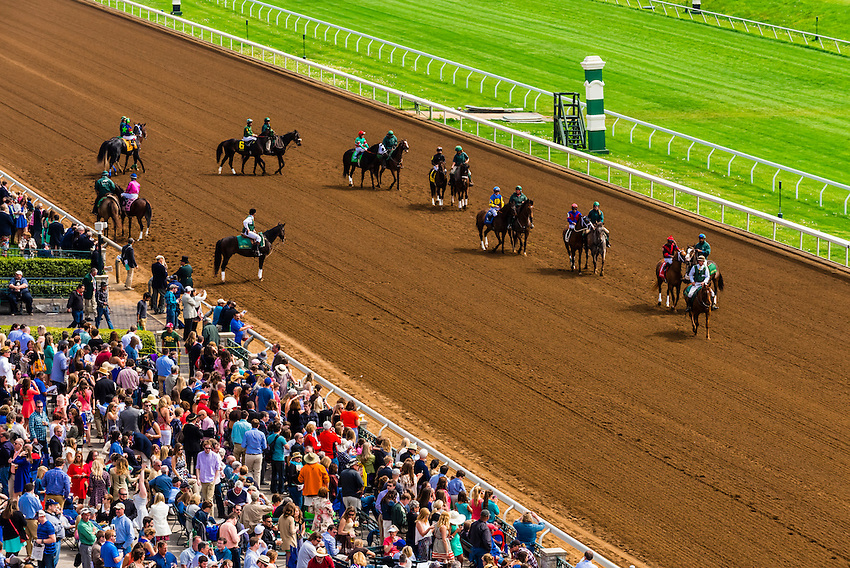 race horses walking to the starting line on the dirt track at keeneland racecourse lexington. Black Bedroom Furniture Sets. Home Design Ideas
