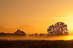Valley fog with silhouetted trees and Cascade Mountain range at sunrise