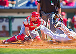 4 March 2016: St. Louis Cardinals catcher Carson Kelly is unable to get Houston Astros outfielder Andrew Aplin out at the plate, as the ball pops loose during a Spring Training pre-season game at Osceola County Stadium in Kissimmee, Florida. The Cardinals fell to the Astros 6-3 in Grapefruit League play. Mandatory Credit: Ed Wolfstein Photo *** RAW (NEF) Image File Available ***
