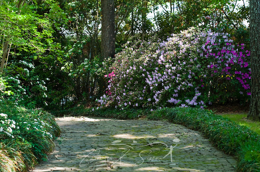 Cobblestone path with azaleas in columbus mississippi for Columbus spring