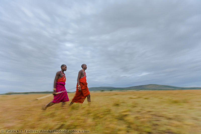 Masai tribesman walk across the savannah at sunrise in the Masai Mara, Kenya, Africa