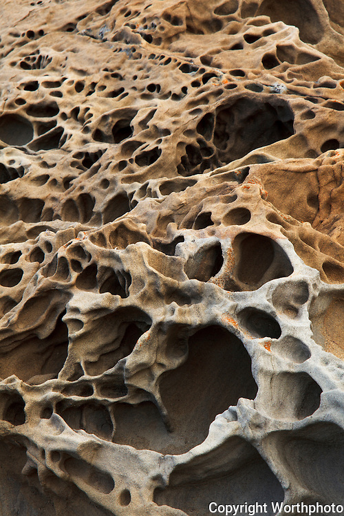 Craters, etched by water and what is in that water, tafoni formations at Bean Hollow State Beach in California lie with their pseudo-mouths gaping, open for more of what first created them.