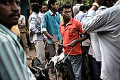 Kondh tribes are seen with goats that are brought for sacrifice at the annual Kondh festival in Lanjigarh, Orissa, India.