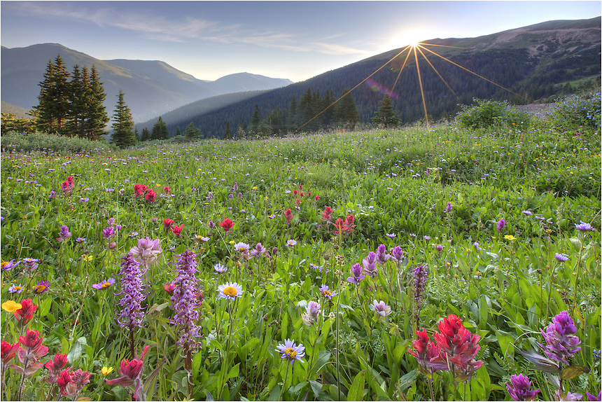 As the sun streamed the first light of day over the mountains, beautiful Colorado wildflowers filled the fertile valleys of Butler Gulch. This Coloardo wildflower image was captured at sunrise in late July. I made the hike up to this location in the dark, arriving a little before the first light of day. The views were well worth the effort.