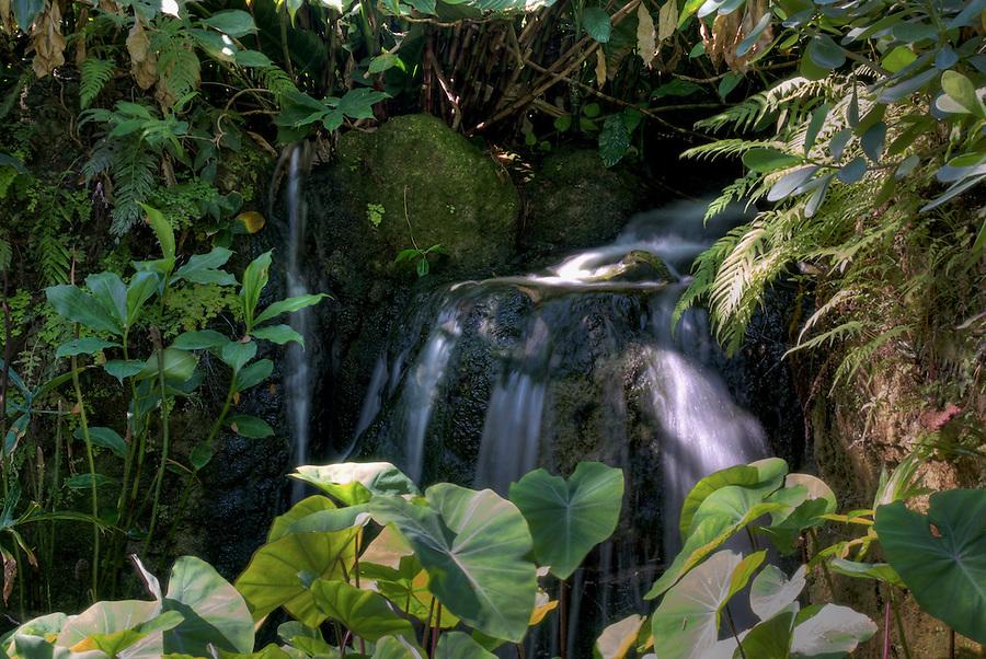 Waterfall in Farichild Tropical Gardens in Miami