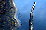 Driftwood lingers in glassy water on the edge of a curvy shoreline