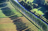 Pappeln am Elbe Luebeck Kanal: DEUTSCHLAND, SCHLESWIG- HOLSTEIN, MOELLN 27.10.2005: Pappeln am Elbe Luebeck Kanal