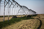 A center pivot irrigation system waters an alfalfa field on Mitchell Baalman's 12,000-acre farm outside of Hoxie, Kan., on Thursday, Oct. 11, 2012. As historically dry conditions continue, farmers from South Dakota to the Texas panhandle rely on the Ogallala Aquifer, the largest underground aquifer in the United States, to irrigate crops. After decades of use, the falling water level ? accelerated by historic drought conditions over the last two years ? is putting pressure on farmers to ease usage or risk becoming the last generation to grow crops on the land. Farmers like Mitchell Baalman and Brett Oelke (both not pictured), are part of a farming community in in Sheridan County, Kansas, an agricultural hub in western Kansas, who have agreed to cut back on water use for crop irrigation so that their children and future generations can continue to farm and sustain themselves on the High Plains.