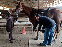 """Tee Time, a Tennessee Walking Horse, is inspected by Nathan Slaven (right) of Independence, Ore., under the watchful gaze of his owner, Sue Williams, from McCleary, Wash., at the Northwest Walking Horse Classic in Spanaway, Wash., on July 11, 2015. Slaven is a """"designated qualified person (DQP) certified by the USDA to check for soring, an illegal practice that involves burning a horses skin with chemicals or pressure padding. The horse passed his inspection. (© Karen Ducey Photography)"""
