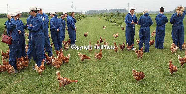 """Foto: VidiPhoto..RANDWIJK - Bij het biologische legpluimveebedrijf van Geurt van Manen uit Randwijk konden deskundigen uit de pluimveewereld en vertegenwoordigers van de overheid donderdag kennismaken met één van de diervriendelijkste kippenstallen van Nederland. De super-scharrelstal van Van Manen heeft het """"Beter Leven""""-kenmerk van de Dierenbescherming en het bijbehorende """"scharrelei-nieuwe- stijl"""" heeft drie sterren; het hoogst haalbare op het gebied van dierenwelzijn. De kippen het onder meer een vrije uitloop in een speciaal daarvoor ingericht weiland met fruitboompjes."""
