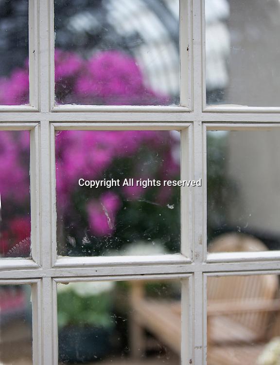 Flowers can be seen growing through a dirty window in an indoor garden.