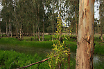 Hadera forest