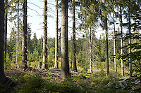 FOREST_LOCATION_90133