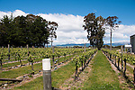 New Zealand, South Island, Marlborough, winery touring and tasting of Nautilus Estate Sauvignon Blanc and Pinot Noir wine. Photo copyright Lee Foster. Photo #126248