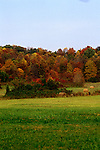 TN: Tennessee Great Smoky Mountains National Park, Mtns, Cades Cove, Fall color          .Photo Copyright: Lee Foster, lee@fostertravel.com, www.fostertravel.com, (510) 549-2202.Image: tnsmok212