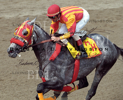 Skip Away, Jerry Bailey up, on Skip Away Day at Saratoga.  1998.